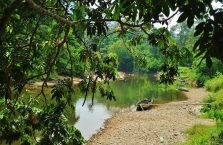 Mulu Park Borneo Malaysia (5)