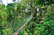 Mulu Park Borneo Malaysia (50)