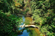Mulu Park Borneo Malaysia (51)