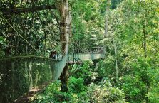 Mulu Park Borneo Malaysia (52)