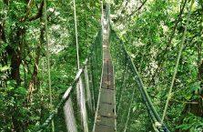 Mulu Park Borneo Malaysia (53)