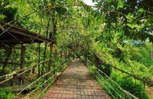Mulu Park Borneo Malaysia (8)