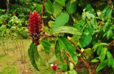 Mulu Park Borneo Malaysia (9)