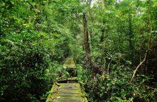 Niah national park Borneo Malaysia (13)