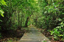 Niah national park Borneo Malaysia (15)