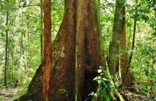 Niah national park Borneo Malaysia (18)
