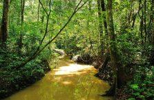 Niah national park Borneo Malaysia (19)