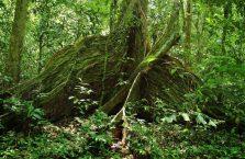 Niah national park Borneo Malaysia (20)