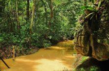 Niah national park Borneo Malaysia (21)