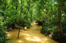Niah national park Borneo Malaysia (22)