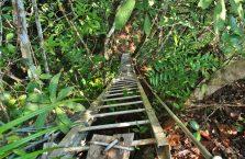 Niah national park Borneo Malaysia (26)