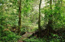 Niah national park Borneo Malaysia (27)