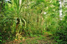 Niah national park Borneo Malaysia (28)