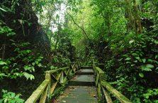 Niah national park Borneo Malaysia (3)