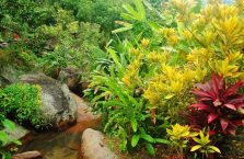 Pulau Tioman (35)