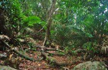 Pulau Tioman (40)