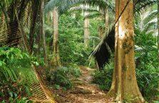 Pulau Tioman (48)