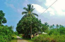 Pulau Tioman (53)