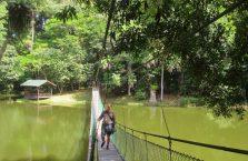 Rainforest Discovery Centre Borneo Malaysia(1)