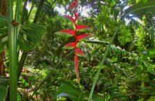 Rainforest Discovery Centre Borneo Malaysia(3)