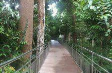 Rainforest Discovery Centre Borneo Malaysia(4)
