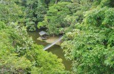 Rainforest Discovery Centre Borneo Malaysia(6)
