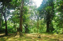 Taman Negara Malaysia (12)