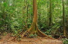 Taman Negara Malaysia (13)