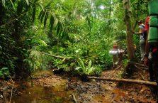 Taman Negara Malaysia (15)