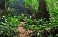 Taman Negara Malaysia (19)