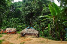 Taman Negara Malaysia (38)