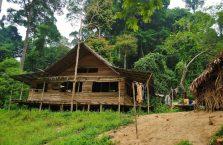 Taman Negara Malaysia (40)