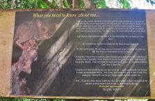 Tarsiers Bohol (1)