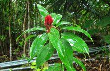 Tarsiers Bohol (9)