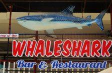 Oslob whale sharks (6)